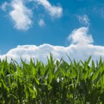 Ceres Launches Investor Initiative Targeting the Largest Food Sector Emitters